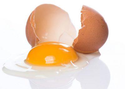 Ligne de production d'œufs liquides